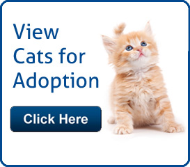 Cats for Adoption in Palm Beac County