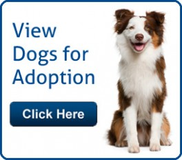 Palm Beach County Animal Control - Adopt Dogs