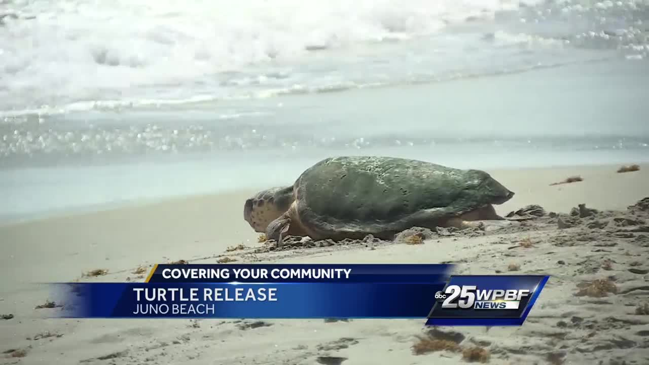 Turtle released into ocean Tuesday morning