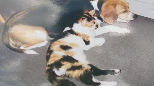 Pet owner searching for person who poured acid on her cat
