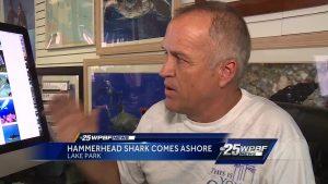 Hammerhead Shark in Lake Park