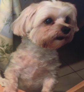 Dog stolen from Palm Beach Gardens Petco