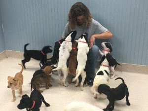 45 puppies rescued