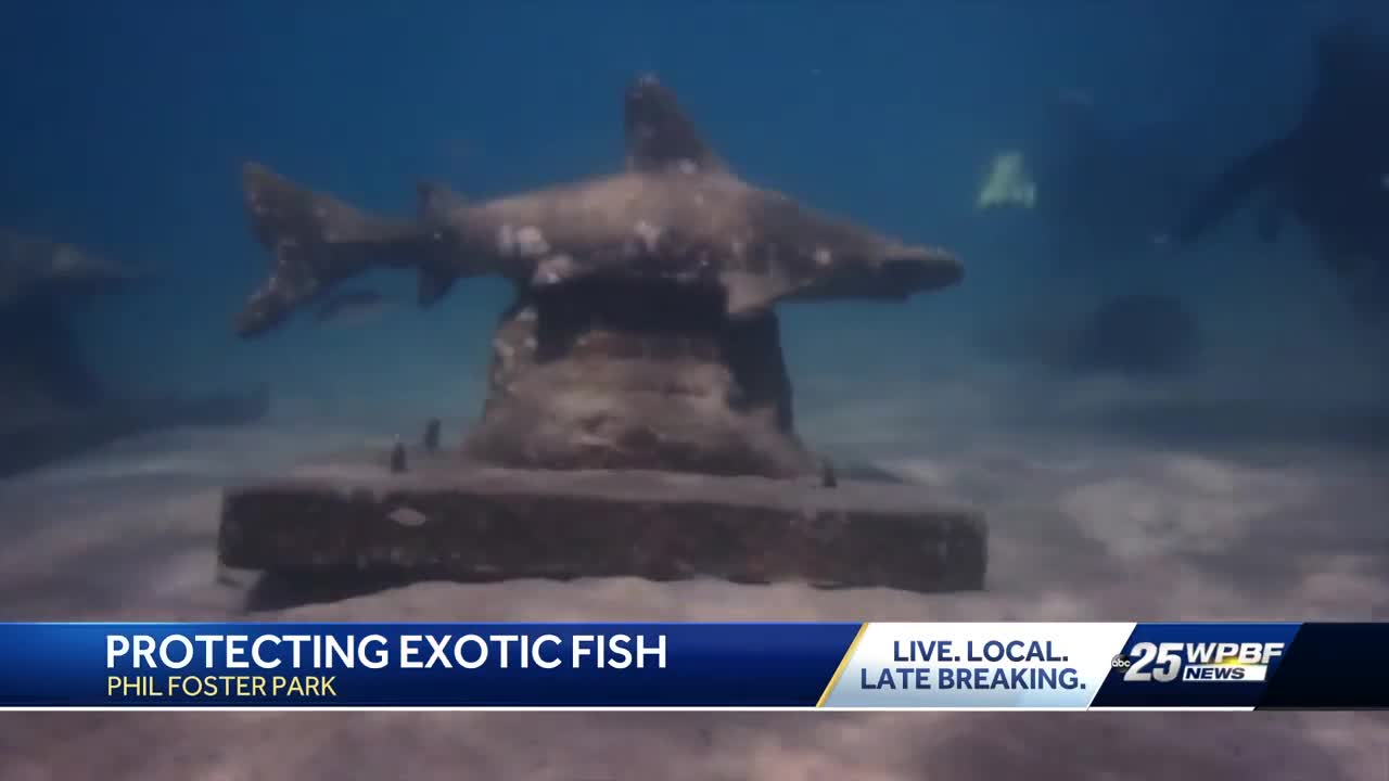 Protecting exotic fish in Riviera Beach