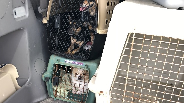 Dozens of dogs rescued ahead of Hurricane Florence