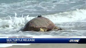 'Honda' released into the ocean