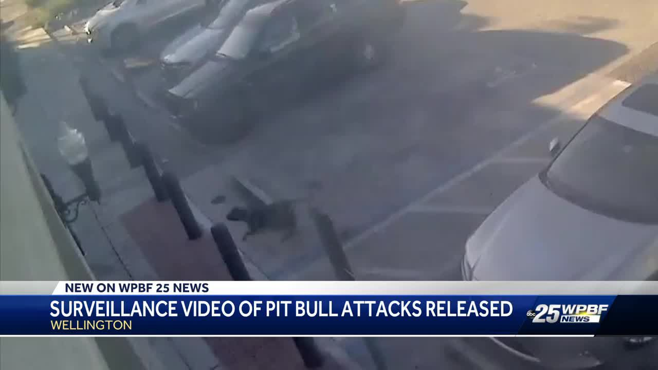 Surveillance video shows dogs attacking five people at Walgreens