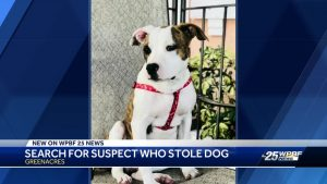 Pit bull mix 'dognapped' in Greenacres reunited with owner