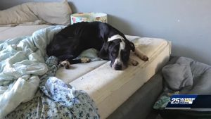 Renters left dog inside locked apartment with no food for weeks
