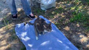 Investigators seek clues in rash of fatal cat shootings