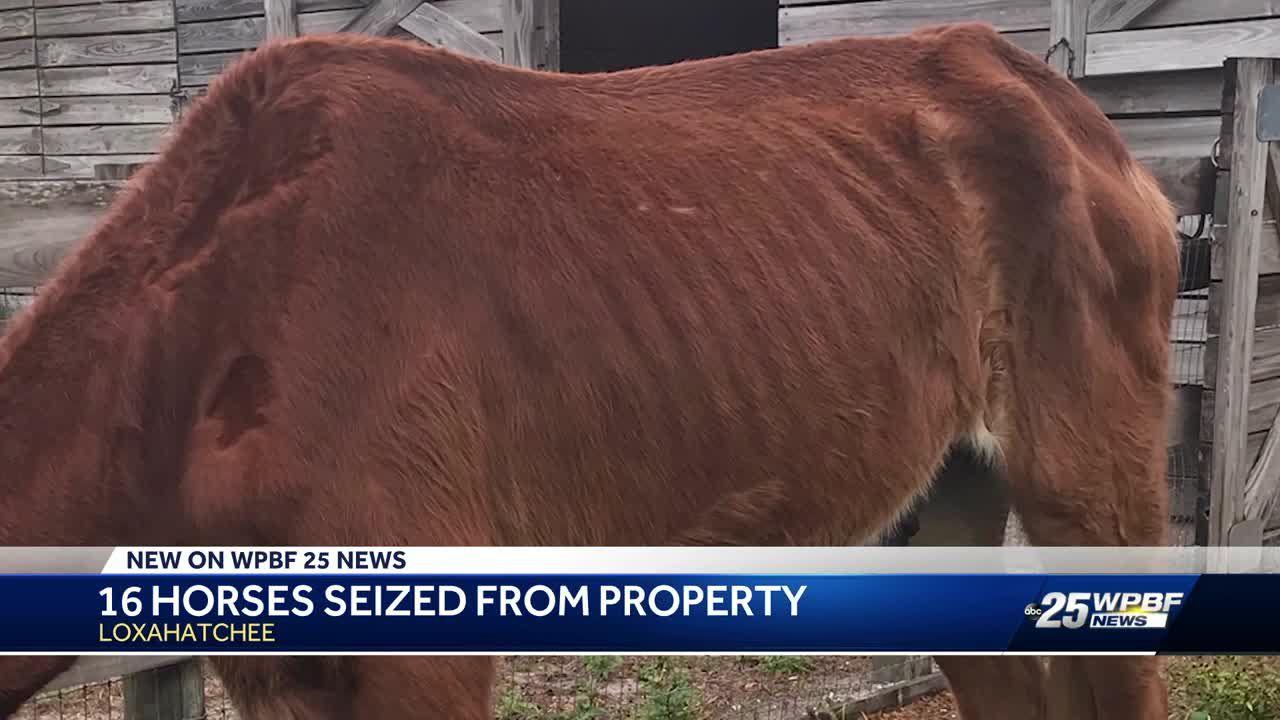 Officials seize 16 horses