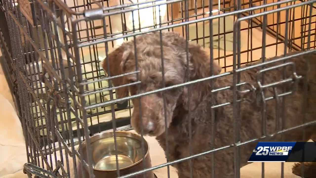 Dogs rescued from China before sold on dog meat trade market are now safe in Palm Beach County