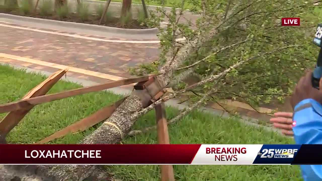 Severe weather leaves uprooted trees and flooded streets across Palm Beach County