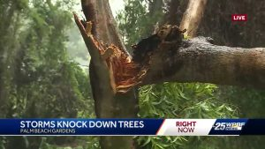 Storms uproot trees in Palm Beach Gardens