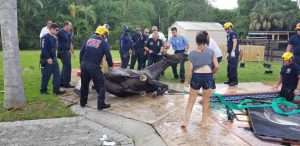 -A horse was rescued in Lake Worth Sunday after he fell into a pool