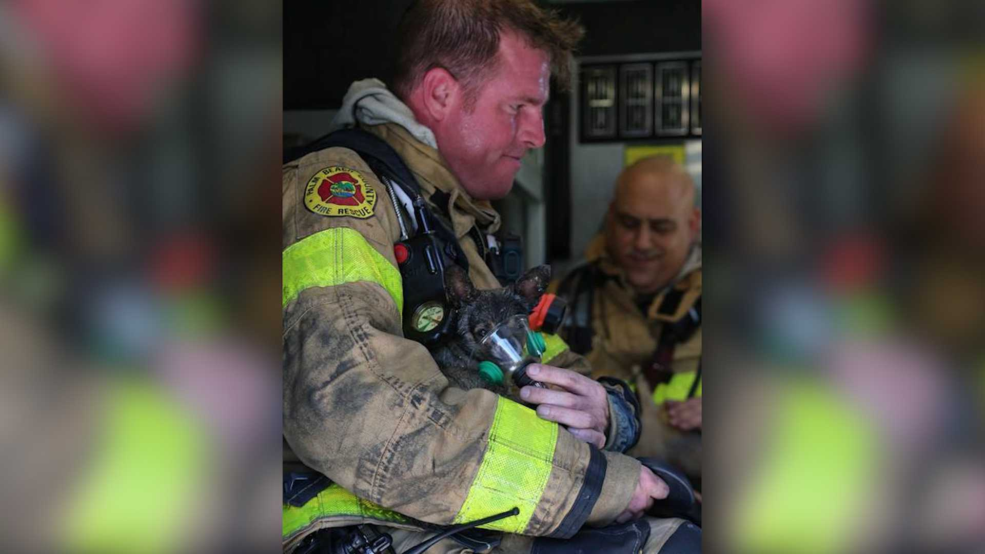 South Florida firefighters find new ways to protect pets from fires using stickers