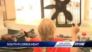 Floridians try to stay cool in the heat