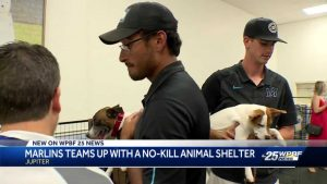 Miami Marlins team up with no-kill animal shelter