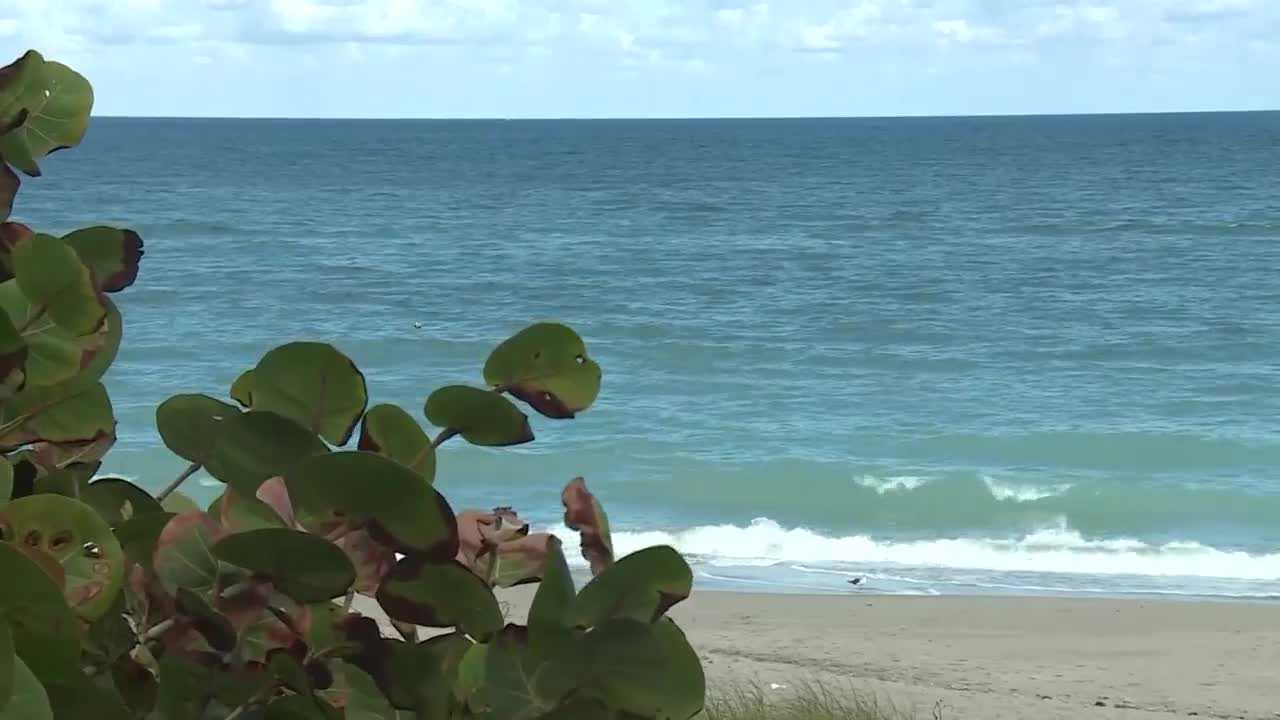 Delray Beach police investigating surfer's death