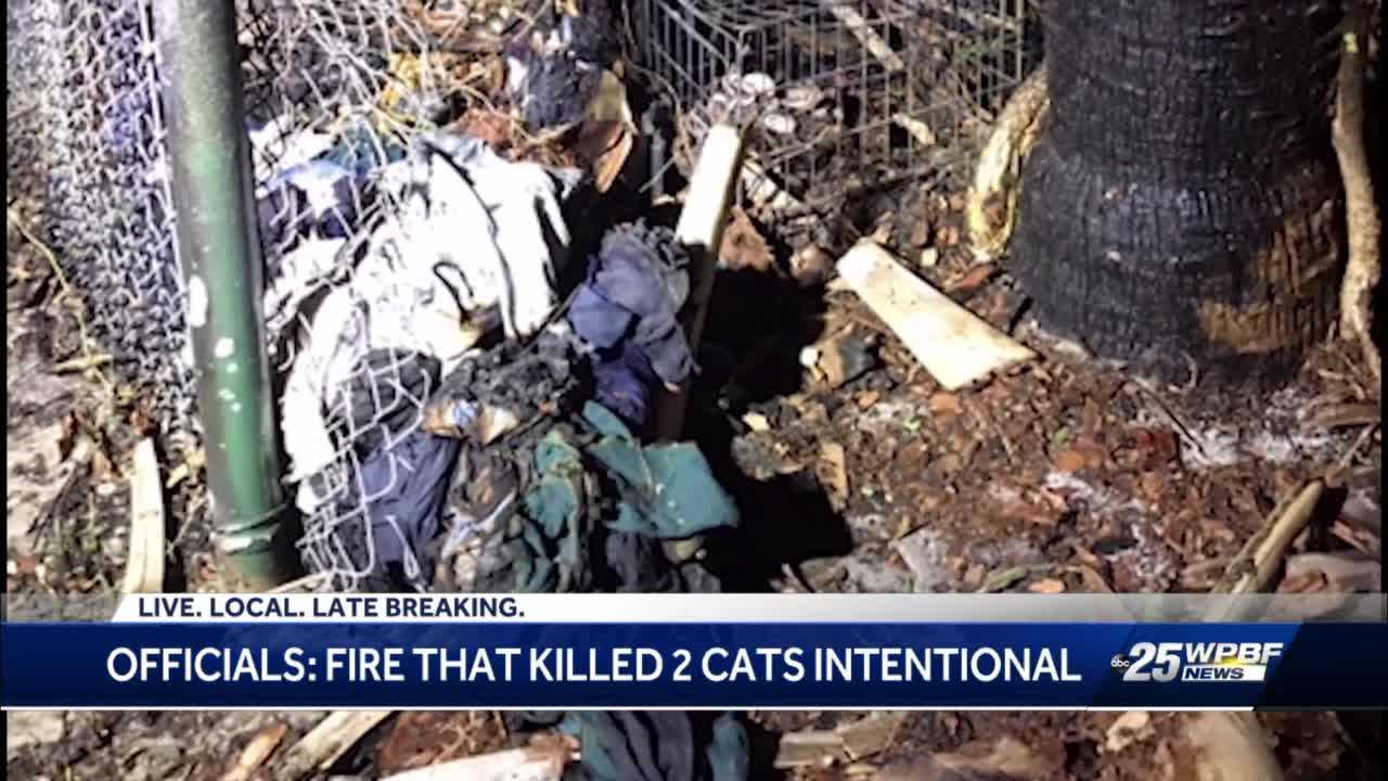 Two cats burned to death near West Palm Beach park