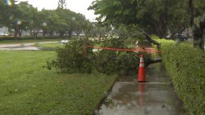 Woman killed by tree branch in Boca