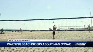Lifeguard treated after encounter with man o' war