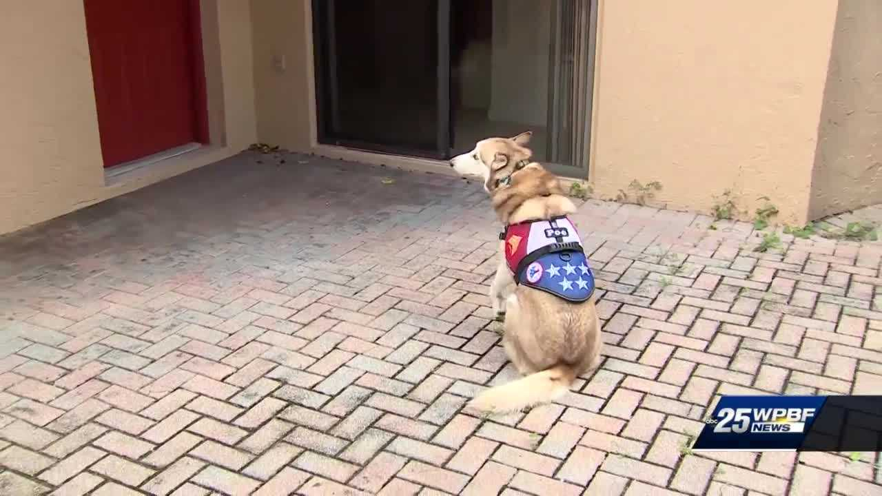 Boca Raton veteran told to muzzle service dog or move out