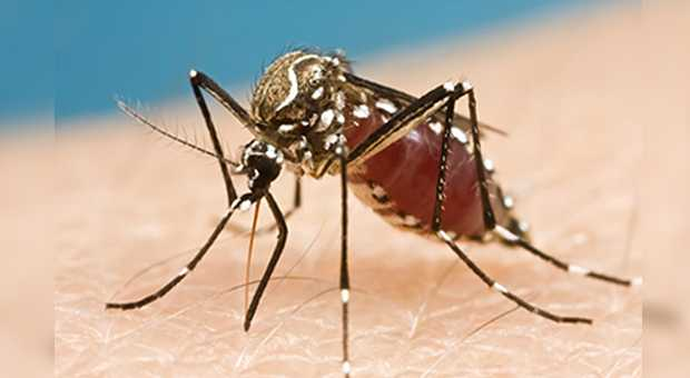 Palm Beach County officials issue advisory of mosquito-borne illness
