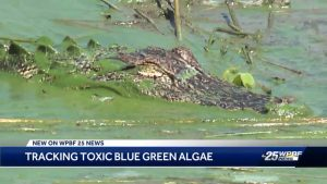 U.S. Congressman Brian Mast pushing for changes after blue-green algae discovered in Pahokee