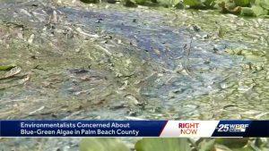 Environmentalist keeping an eye on blue green algae