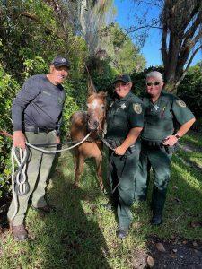 Pony on the run leads deputies on a chase in Boynton Beach