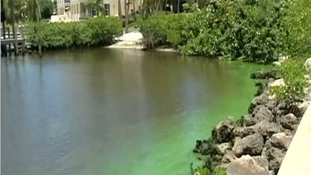 West Palm Beach mayor announces panel to help guide responses to blue-green algae blooms