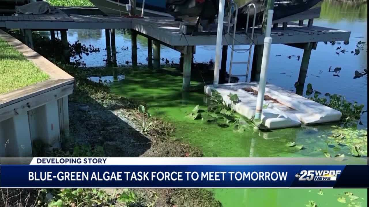 Blue Green Algae task force will discuss West Palm Beach drinking water contamination