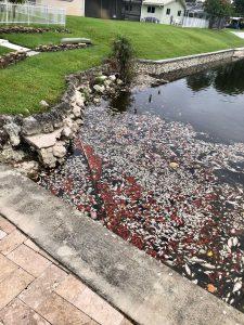 Hundreds of dead fish appear in Boca Raton lake