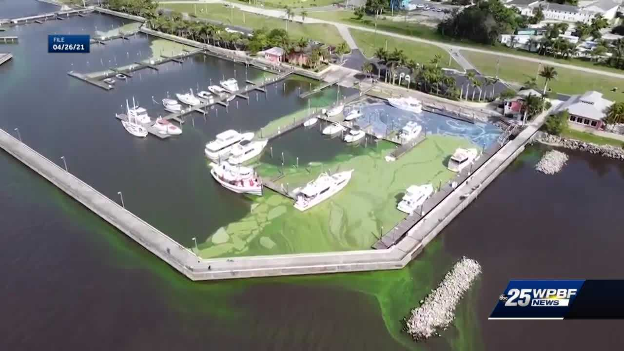 Florida water quality experts using bubbles to fight algae