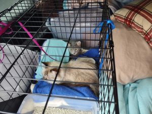 Increased homelessness leading to desperate decisions for pet owners